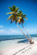 Beautiful white beach with tropical palm trees, Saona, Caribbean