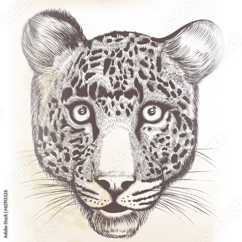 Detailed vector hand drawn portrait of leopard animal