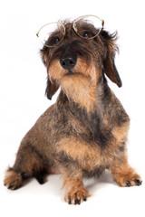 Cane cura degli occhi