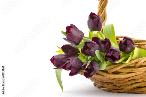 purple tulips in a basket