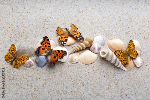 Sea shells and butterfly on sand