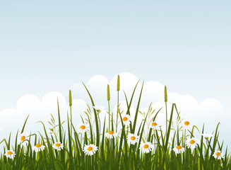 Wild flower meadow on blue sky background