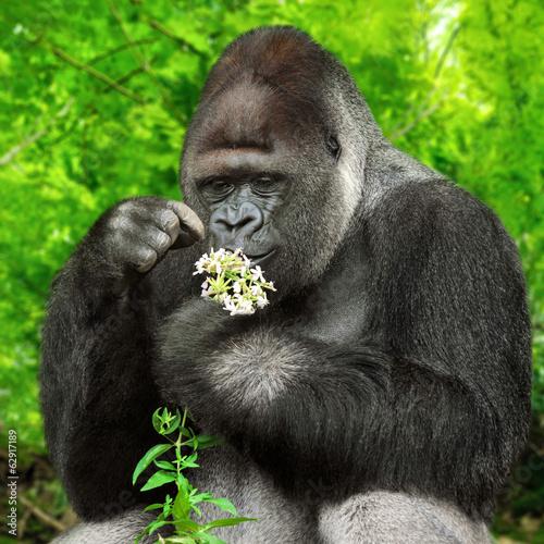 Poster Gorilla bewundert Blümchen