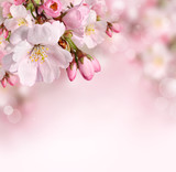 Fototapety Spring flowers background with pink blossom