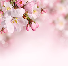 "Постер, картина, фотообои ""Spring flowers background with pink blossom"""