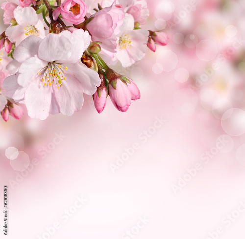 Keuken foto achterwand Lente Spring flowers background with pink blossom