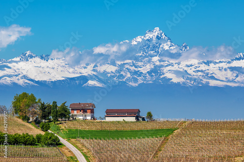 Vineyards and Monviso peak in Piedmont, Italy.