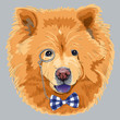vector funny cartoon hipster chow-chow dog