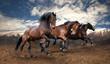 wild jump bay horses - 62921770