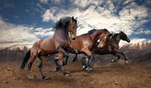 chevaux bais de saut sauvage