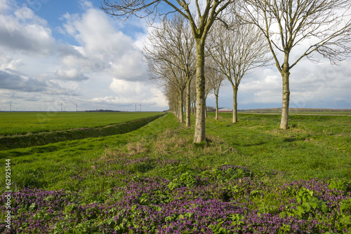 Purple flowers in front of trees in spring