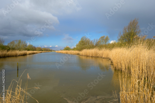 Reed bed along a lake in a cloudy spring