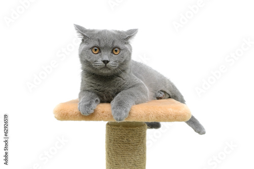 kitten on a white background closeup