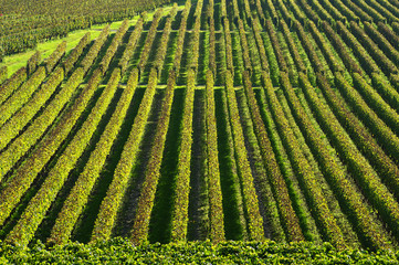 Vineyard-Landscape-Saint-Emilion-France