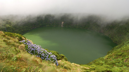 Flowers on the volcano