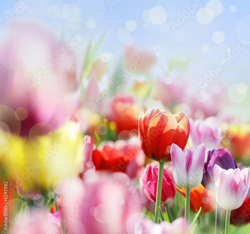 canvas print picture tulpen lichter abstrakt