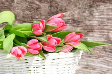 Rosa Tulpen im Körbchen