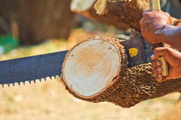 Logger man is cutting wood
