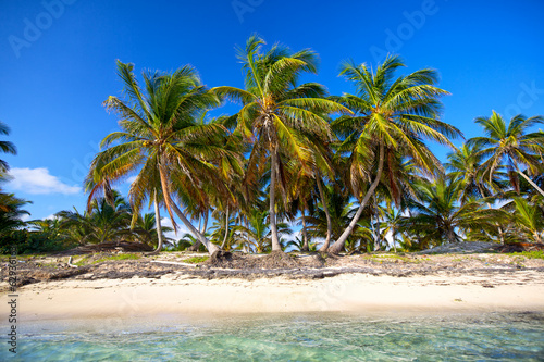 Palm trees on untouched tropical beach, Dominican Republic
