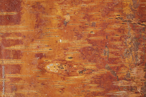Texture of  tree bark. Wood background