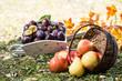 Obst geerntet