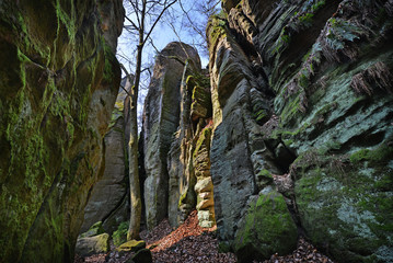 landscape with sandstone rocks - Cesky raj, Czech republic