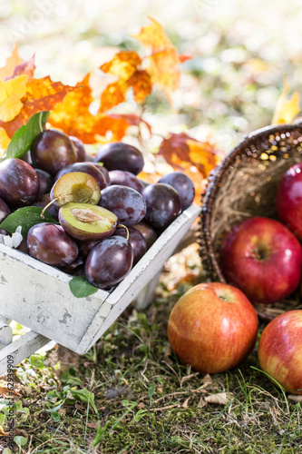 Leckeres Obst in der Natur