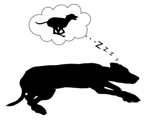 Hund träumt