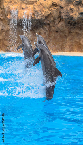 Dolphins racing while doing a tail stand