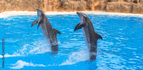 Papiers peints Dauphin Dolphins performing a tail stand in a pool in a park show