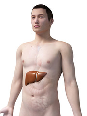 illustration of the liver of an asian male guy