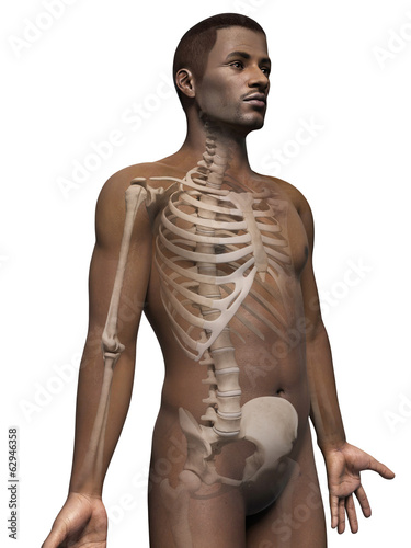 anatomy of an african american man - skeleton