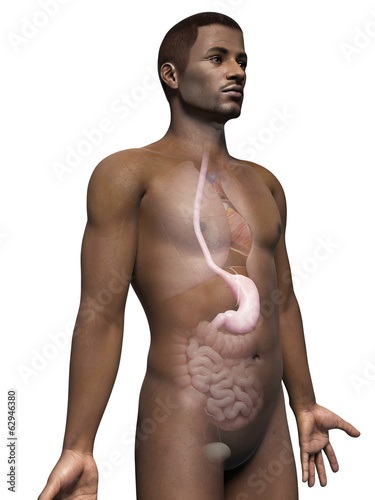 anatomy of an african american man - stomach