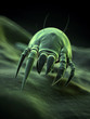 medical illustration - a typical house dust mite