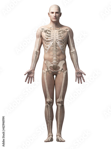 canvas print picture male anatomy illustration - the skeleton