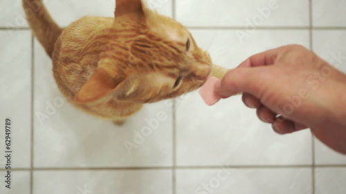 Disabled Three Legged Cat Takes a Treat
