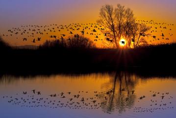 Wild Geese on an Orange Sunset