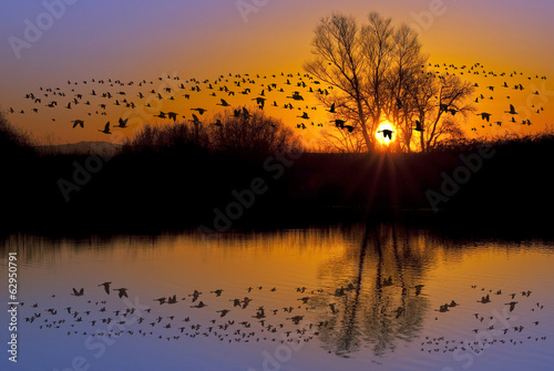 Wild Geese on an Orange Sunset