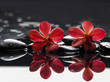 Two red orchid with stones reflection