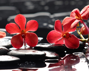 still life with red orchid on pebble