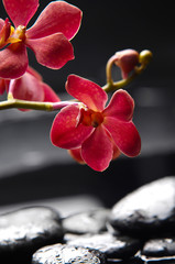 spa concept –branch orchid with stones reflection