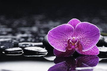 spa concept –pink orchid with wet background