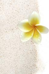 fleur de frangipanier sur sable blanc
