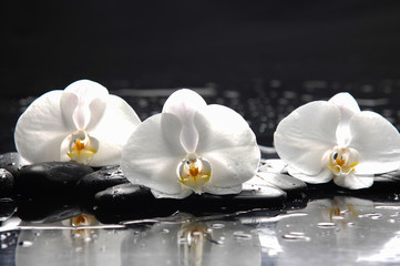 three white orchid with stones and wet background