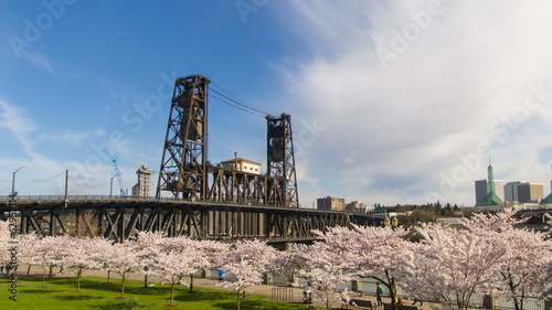 Flowering Cherry Blossom Trees Spring Season in Portland OR