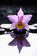 orchid with wet background
