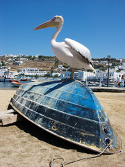 Pelican Bird on the Blue Boat