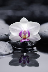 Single white  orchid with zen stones reflection
