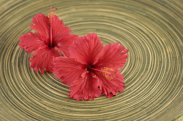spa red hibiscus flower and wooden texture