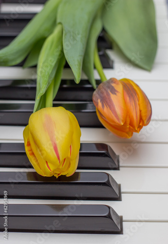 Orange and red tulip on a piano
